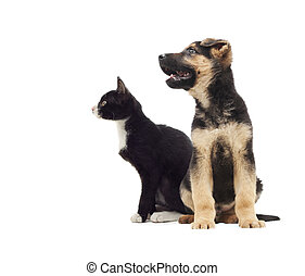 cat and dog looking to the side