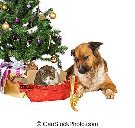 Cat and dog opening Christmas gifts - A faithful dog looks...