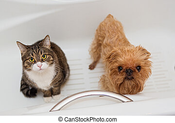 Cat and dog sitting in the bathroom