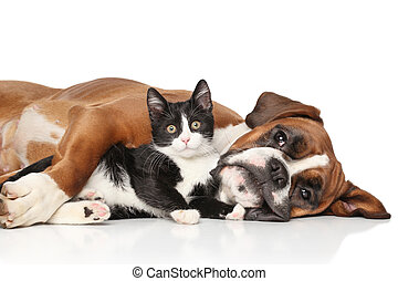Cat and dog together - Close-up cat and dog together lying...