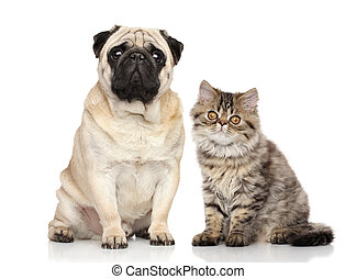 Cat and Dog together