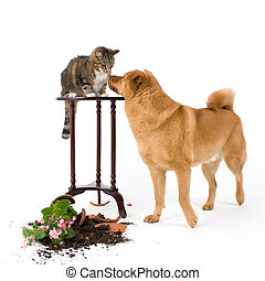 Cat and Dog troublemakers - Cat and dog breaking things...