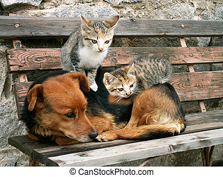 cat and dog - two young cats and dog are friends