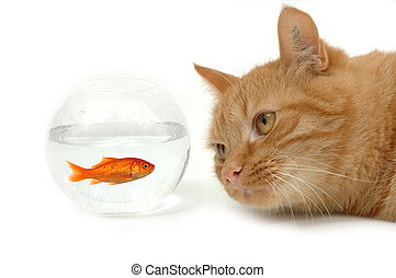 Cat is lokking at a fish in a bowl. Note the cat did not eat the fish is still alive and in well being.