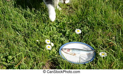 cat and fish on grass in plate