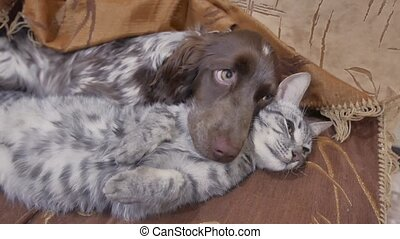cat and friendship a dog are sleeping together indoors funny video. cat and dog