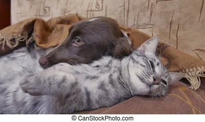cat and friendship a dog are sleeping together indoors funny...