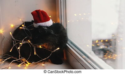 Cat and holiday. Cat wrapped in a garland and in a hat of Santa Claus.