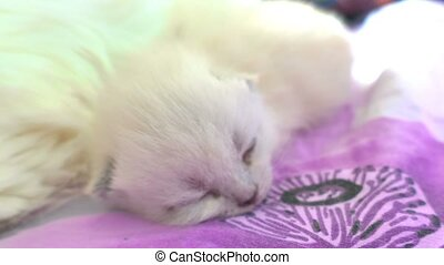 Cat and kitten hug and sleep in compassion - Cat and kitten...