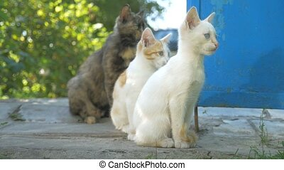 cat and kitten outdoors sitting family slow motion video