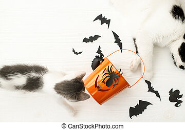 Cat and kitten playing at Jack o lantern candy pail on white background with bats and spider decorations, celebrating halloween at home. Trick or treat!