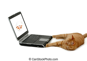 Cat is looking at a laptop with a picture of a bowl of fish. The fishbowl picture is also taken by me.