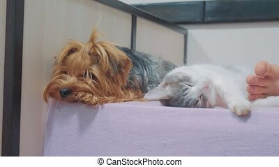cat and lifestyle a dog are sleeping together funny video....