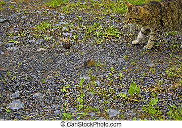 Cat and mouse are watching each other.