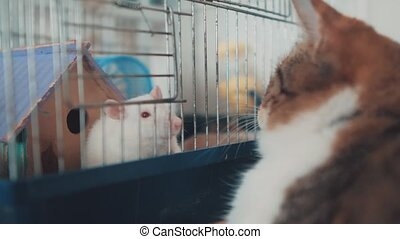 cat and mouse catches a white pet rat in a cage. slow motion...
