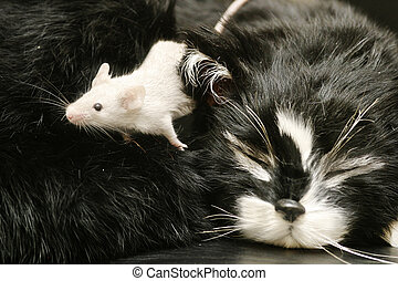 Cat and Mouse - A mouse crawling over a sleeping cat.