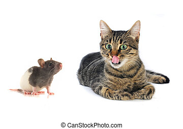 cat and mouse on a white background