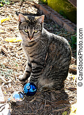 Cat and Ornaments