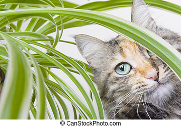 Cat and Potplant - Cat playing amongst the leaves of a ...