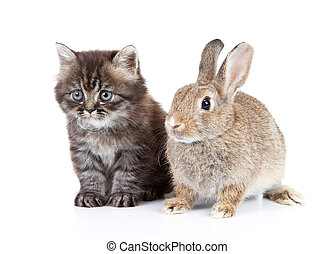 cat and rabbit isolated on white background