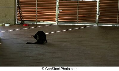 cat and Revolving door light and shadow