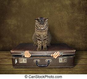 Cat and suitcase