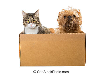 Cat and the dog sitting in a cardboard box