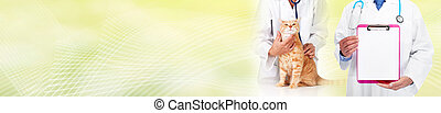 Cat and veterinarian doctor - veterinary physician doctor...