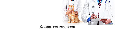Cat and veterinarian doctor - veterinary physician doctor ...