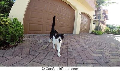 cat approaching a camera
