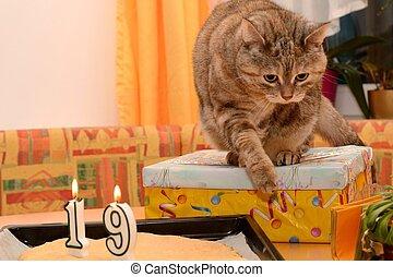 Cat at birthday party - Hauskatze feiert ungewoehnlichen...