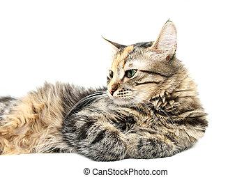 Cat at Peace