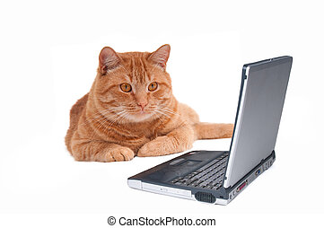 Cat at the Laptop