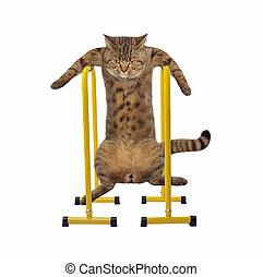 Cat athlete 1