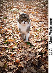 cat autumn leaves