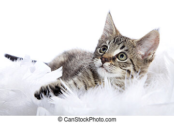 cat baby looks sweet
