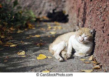 cat basking