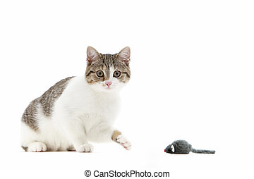 Cat batting at a toy mouse with its paw - Humorous image of ...