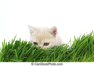 cat behind grass