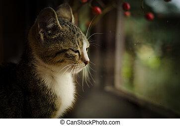 cat behind window portrait