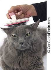 Beautiful cat being brushed and groomed by owner