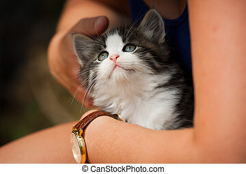 Cat being hugged - A kitten held in a young woman's arms, ...