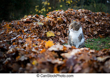 cat beside pile of autumn leaves