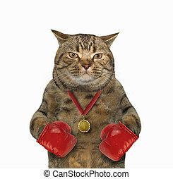 Cat boxer 1