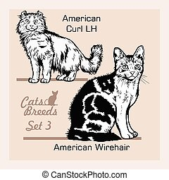 Cat Breeds - American wirehair, American Curl LH - Cheerful cats isolated on white - vector set illustration