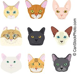 Cat breeds Vector Collection: Set of 9 different cat breeds in cartoon style.