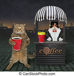 Cat buys coffee in night street