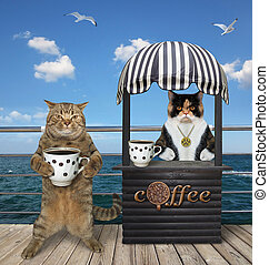 Cat buys coffee in seafront