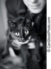 Cat by name Amely