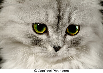 Cat by name Fine - Portrait of a kitten close-up